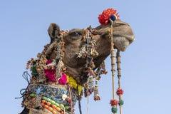Dekorerat huvud av en kamel i öknen Thar under den Pushkar kamelmässan, Rajasthan, Indien close upp arkivbild