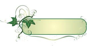 dekormurgröna Fotografering för Bildbyråer