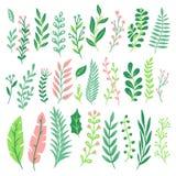 Dekorsidor Bladet för den gröna växten, ormbunkegrönska och den blom- naturliga ormbunken lämnar den isolerade vektoruppsättninge vektor illustrationer