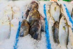 dekorująca rybia świeża lodu rynku sprzedaż Fotografia Stock