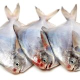 dekorująca rybia świeża lodu rynku sprzedaż Obraz Royalty Free