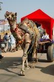 Dekorujący wielbłąd przy rocznym pushkar wielbłądzim mela, India, Rajasthan obrazy royalty free