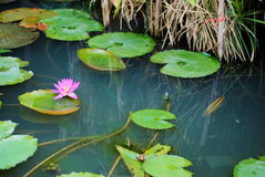dekoruje ogrodowego czas wolny spojrzenia lotosowego staw obraz stock