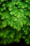 Dekoruje rośliny Obraz Royalty Free