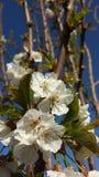 ¼ del 🌠de la primavera del ¼ del 🌠Fotos de archivo libres de regalías