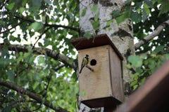  del ðŸ del pájaro ¦ Fotografía de archivo libre de regalías