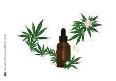 Del aceite puro del extracto del cáñamo o flor y hoja de la marijuana en fondo de la transparencia con la tensión de CBD para el  ilustración del vector
