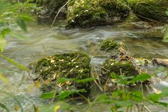 Del av den Venoge floden CH Arkivbilder