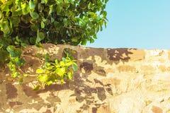 Del av en gammal stenvägg och en trädfilial ovanför henne Royaltyfri Fotografi