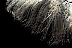 Del av en vit strutsfjäder på en svart bakgrund royaltyfri foto