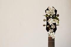Del av gitarren med blomningkörsbäret arkivbild