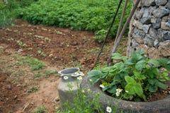 Del av grönsakträdgården som planteras med organiska växter royaltyfri fotografi