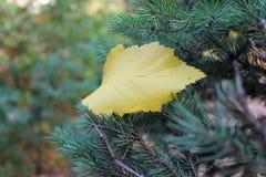 Del av hösten Fotografering för Bildbyråer