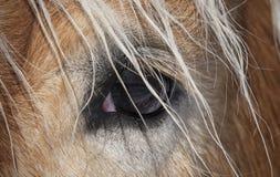 Del av huvudet för häst` s Arkivfoto
