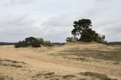 Del av Kootwijkeren Zand Arkivfoto