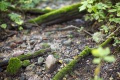 Del av naturen i skog och den gamla floden royaltyfri foto