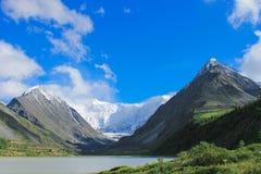 ` del beluga del ` della montagna Fotografie Stock