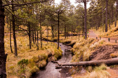 Del bosque de Mexico för campos för FN-sueñoen los Arkivbild