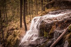 Del bosque de Mexico för campos för FN-sueñoen los Royaltyfri Fotografi
