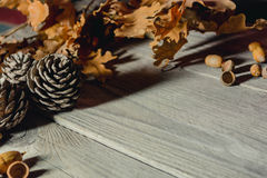 Del bosque todavía del otoño vida Imagenes de archivo