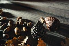 Del bosque todavía del otoño vida 8 Imagenes de archivo
