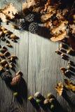Del bosque todavía del otoño vida 9 Imagenes de archivo