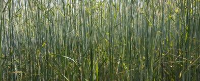 Del campo di fine fondo verde della natura su - Immagini Stock Libere da Diritti