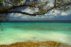 Del Caribe Imagen de archivo libre de regalías