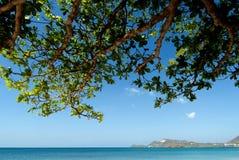 Del Caribe imagen de archivo