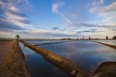 Del Ebro di delta Fotografie Stock Libere da Diritti