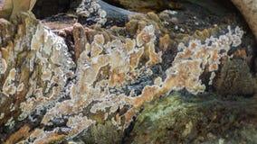 Del enfoque cantidad fungosa hacia fuera, videoclip de la naturaleza HD almacen de metraje de vídeo