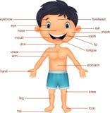 Del för tecknad filmpojkeordlista av kroppen royaltyfri illustrationer