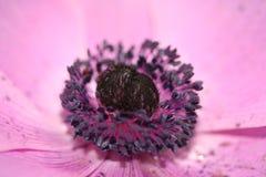 Del fiore fine su e personale porpora fotografia stock