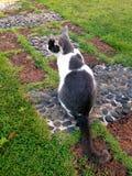 Del gattino ritratto all'aperto Fotografie Stock Libere da Diritti