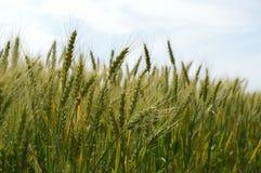 Del grano fine su Fotografia Stock