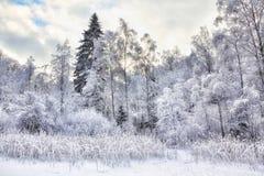Del invierno del paisaje lago hermoso reeds de la naturaleza al aire libre Foto de archivo libre de regalías