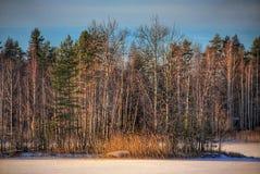 Del invierno del paisaje nieve de Art Nature Beautiful Trees Birch de la foto al aire libre Imagen de archivo libre de regalías