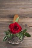 Del jardín todavía del concepto vida con la paleta color de rosa y del jardinero Fotografía de archivo libre de regalías