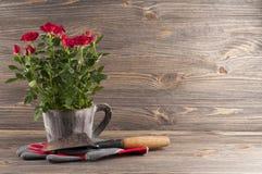 Del jardín todavía del concepto vida con las rosas, los guantes y el trow del jardinero Fotografía de archivo
