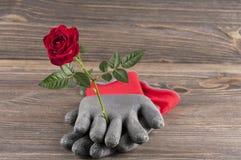 Del jardín todavía del concepto vida con los guantes color de rosa de la flor y del jardinero Imagenes de archivo