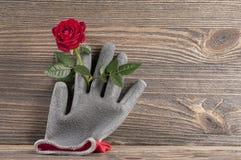 Del jardín todavía del concepto vida con los guantes color de rosa de la flor y del jardinero Imagen de archivo