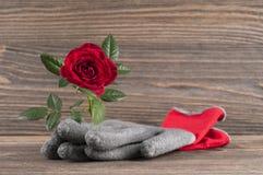 Del jardín todavía del concepto vida con los guantes color de rosa del ` s de la flor y del jardinero Fotografía de archivo libre de regalías
