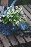 Del jardín todavía del trabajo vida en verano Flores, guantes y herramientas de la manzanilla en la tabla de madera Foto de archivo libre de regalías