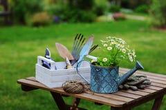 Del jardín todavía del trabajo vida en verano Flores, guantes y herramientas de la manzanilla en la tabla de madera al aire libre Fotos de archivo