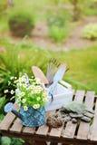 Del jardín todavía del trabajo vida en verano Flores, guantes y herramientas de la manzanilla en la tabla de madera al aire libre Foto de archivo libre de regalías