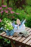 Del jardín todavía del trabajo vida en verano Flores, guantes y herramientas de la manzanilla en la tabla de madera al aire libre Imagen de archivo libre de regalías