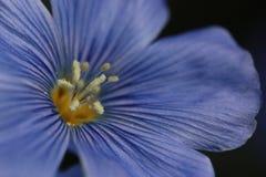 Del lino fine blu in su Fotografie Stock