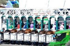 Del Mar Race Track - Startmaschine lizenzfreies stockbild