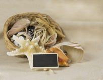 Del mar todavía del shell vida Imagen de archivo