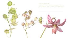 Del resorte de la flora cierre para arriba Foto de archivo libre de regalías